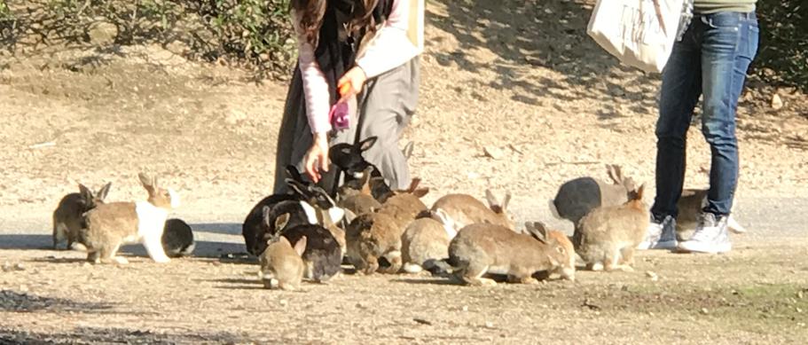11月のうさぎ島(大久野島)餌を与える個人客