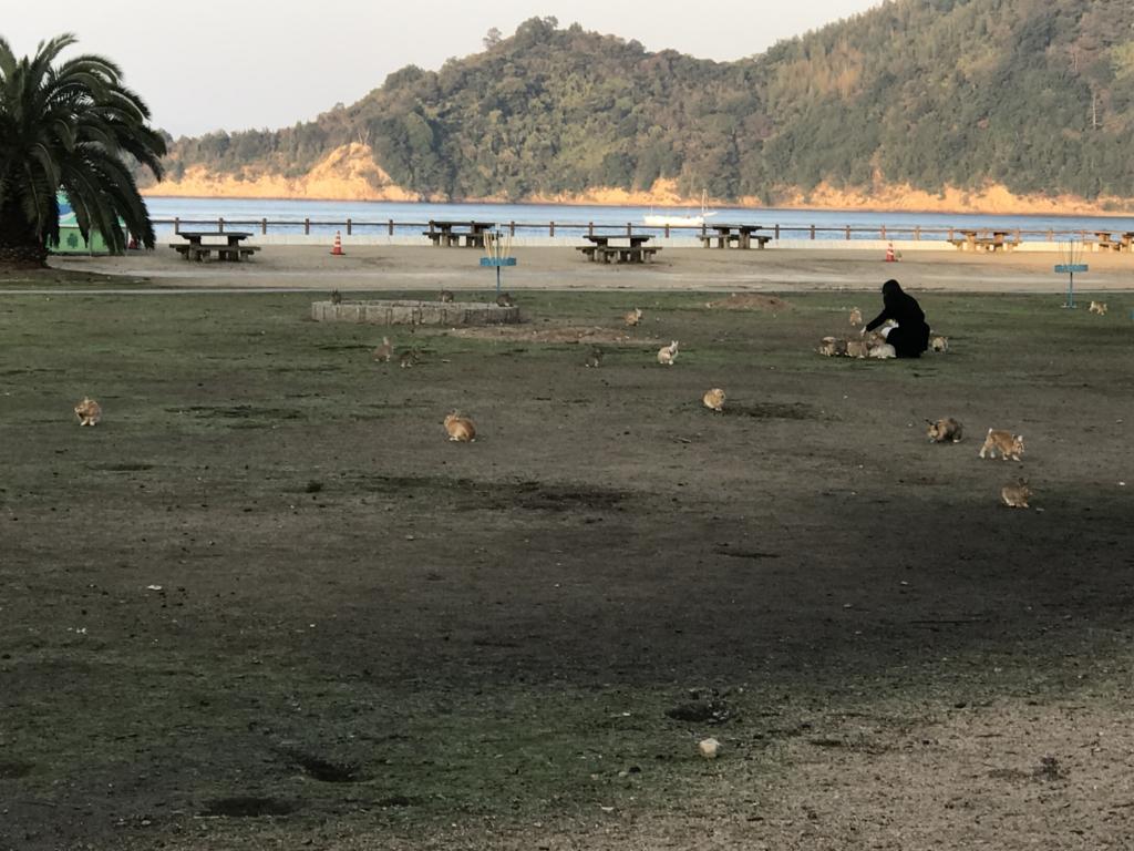 11月のうさぎ島(大久野島)「休暇村 大久野島」海側ベンチ