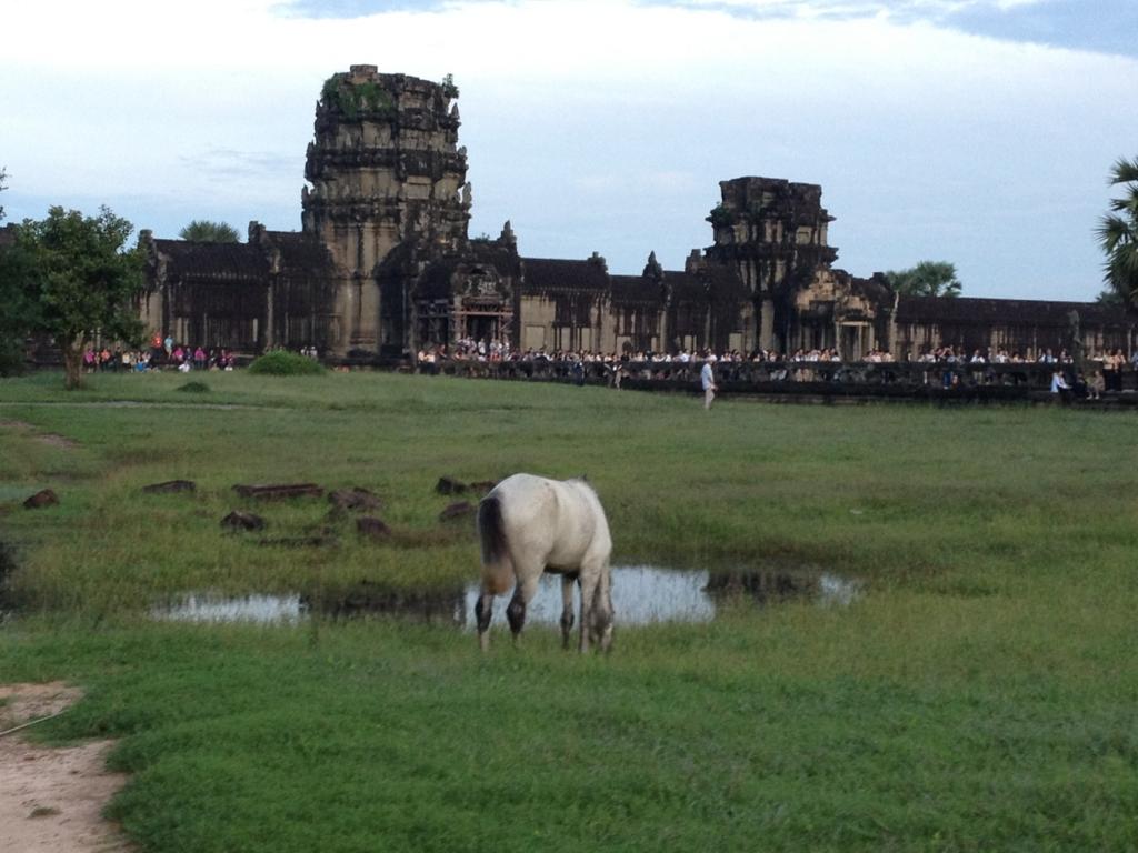 カンボジア シェムリアップ アンコール・ワット遺跡 早朝の壕付近