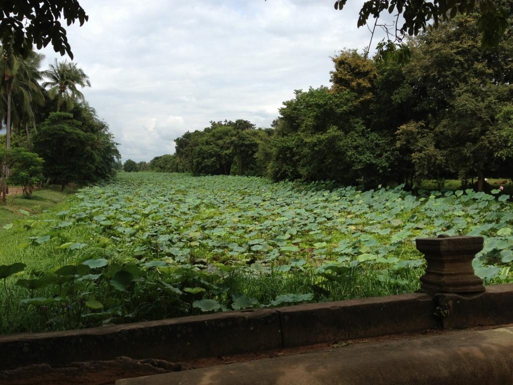 カンボジア「ベンメリア遺跡」外堀 たくさんの蓮