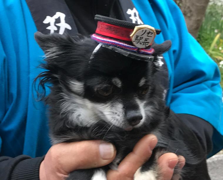 予讃線 観光列車「伊予灘ものがたり」「双海編」伊予上灘駅 犬の駅長さん