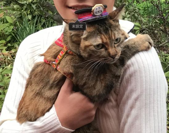予讃線 観光列車「伊予灘ものがたり」「双海編」伊予上灘駅 猫の副駅長さん