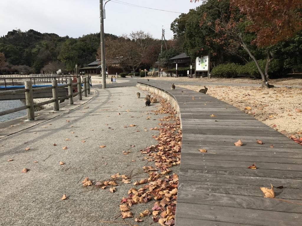 うさぎ島(大久野島)の冬 落ち葉がたくさん