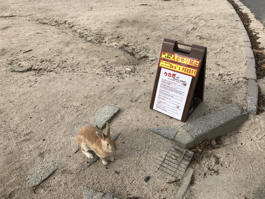 うさぎ島(大久野島)道路付近の 餌やり禁止や注意