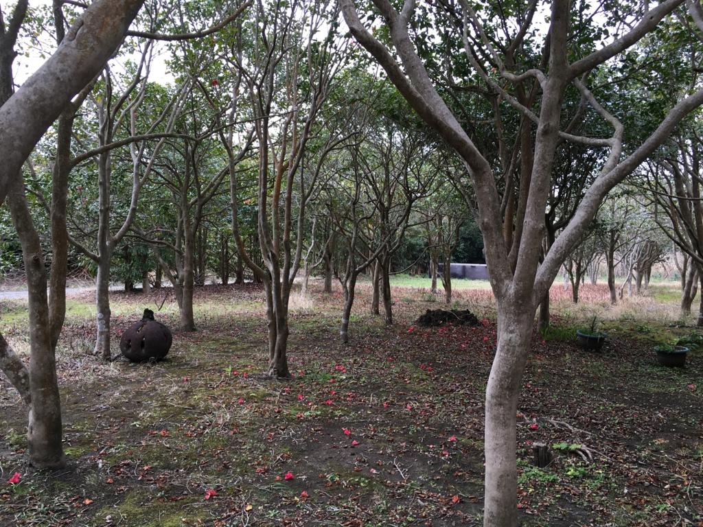 大島町郷土資料館 暮らしを再現した古民家 椿の庭