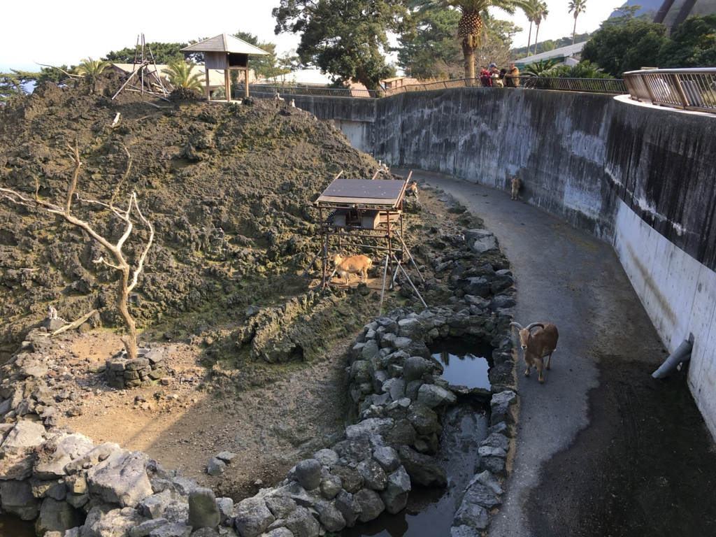 伊豆大島 動物園 サル島