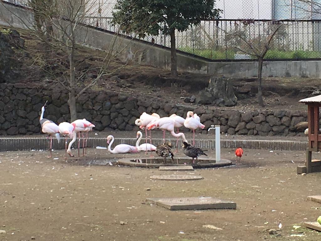 伊豆大島 動物園 フライングゲージ内 フラミンゴ