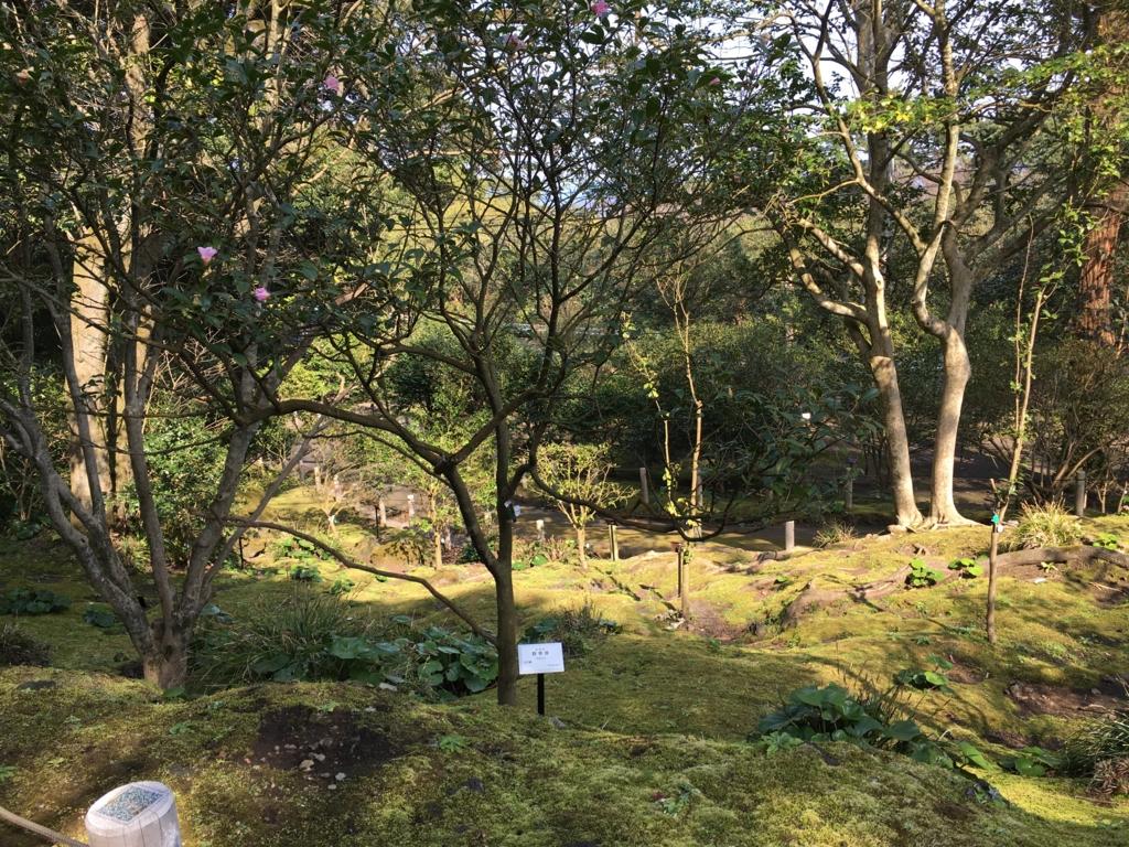 伊豆大島 椿園 椿の花は、どこ...
