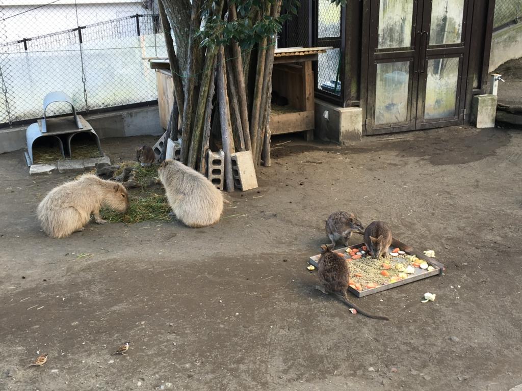 伊豆大島 動物園 フライングゲージ内 いろいろな動物