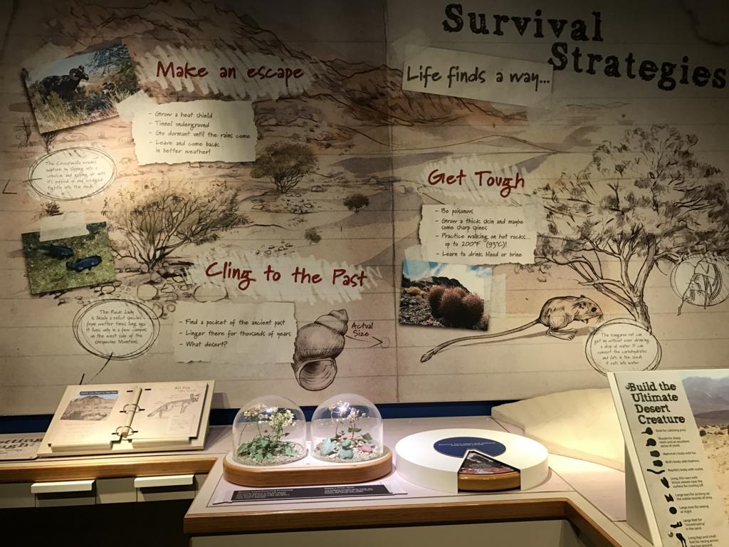 デスバレ国立公園ービジタセンター 展示品
