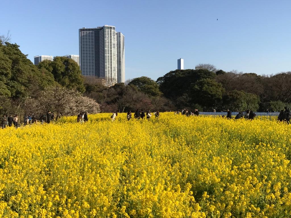東京「浜離宮恩賜庭園」2月 菜の花
