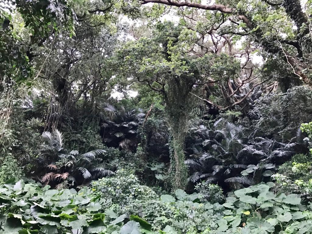 「ガンガラーの谷」生い茂る緑