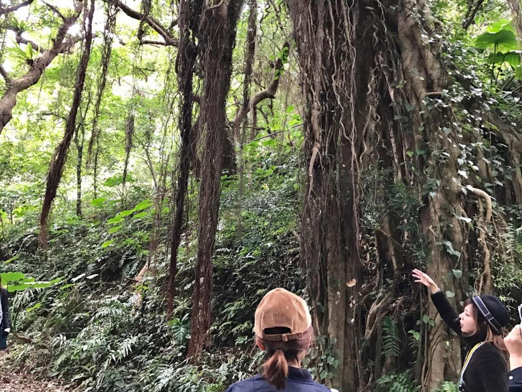 「ガンガラーの谷」ガジュマルの木の根元