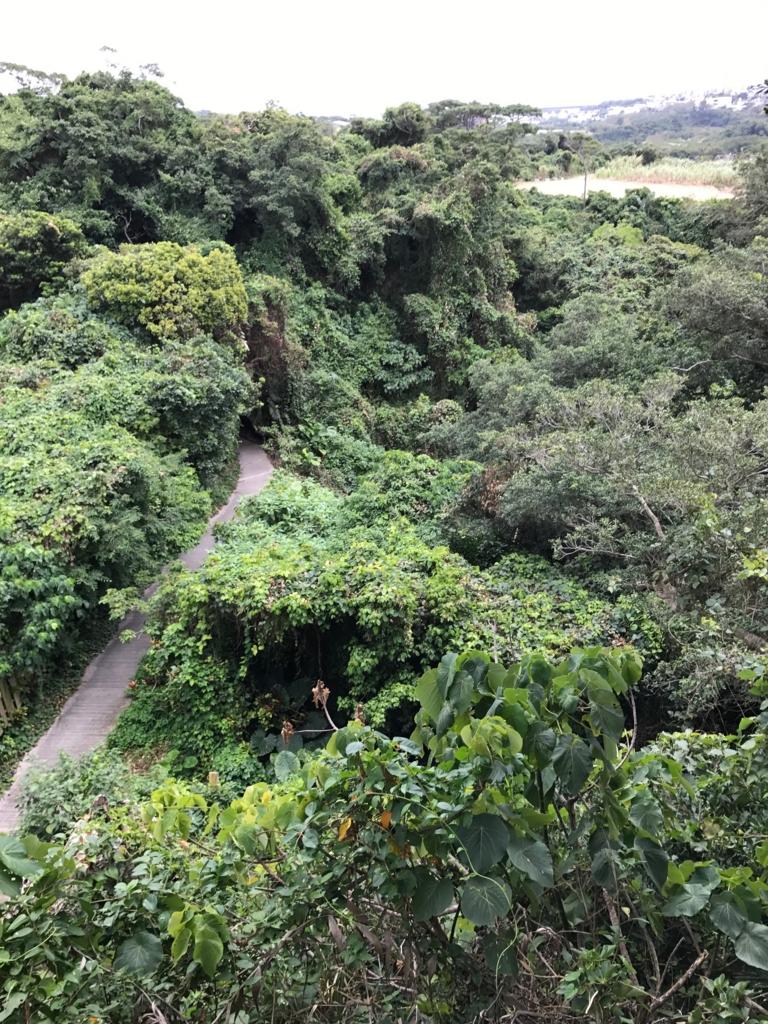 沖縄県「ガンガラーの谷」ツリーテラス から 谷の風景
