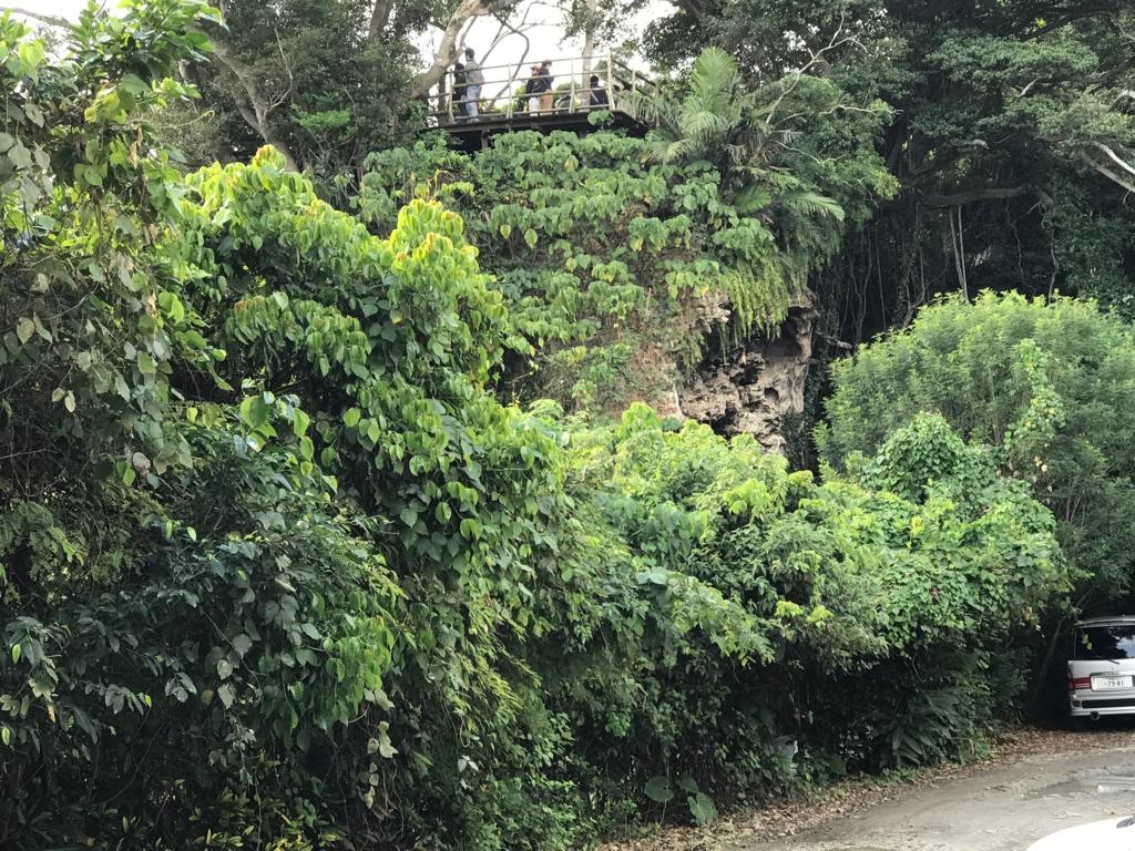 沖縄県「ガンガラーの谷」ツリーテラス を 下から撮影