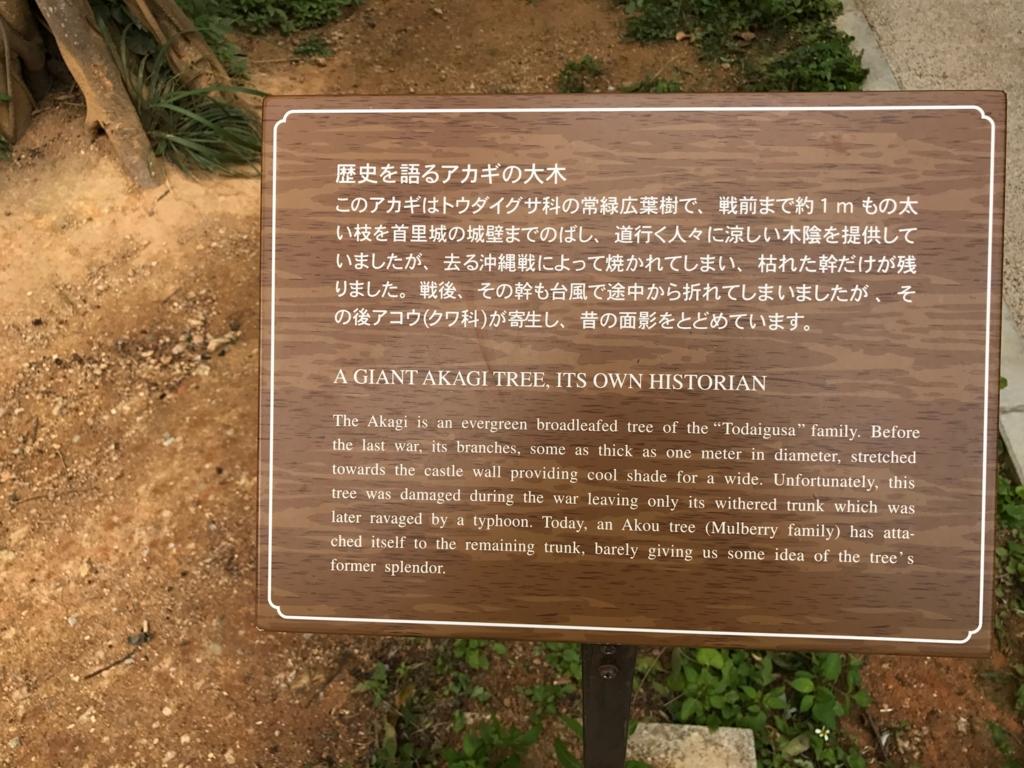 沖縄県 首里城公園 歴史を語るアカギの大木 説明