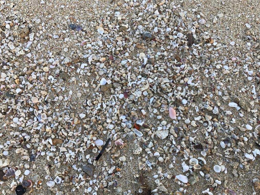 沖縄県 「波の上ビーチ」砂浜 貝殻