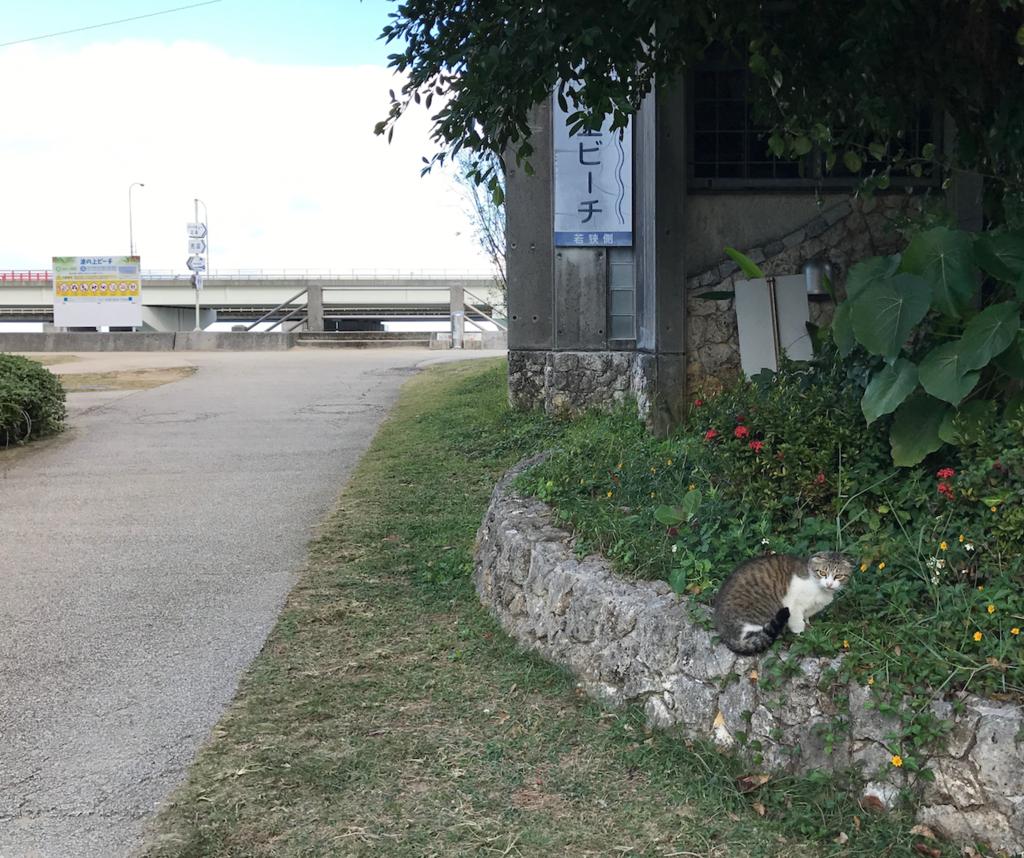 沖縄県 「波の上ビーチ」付近の猫さん