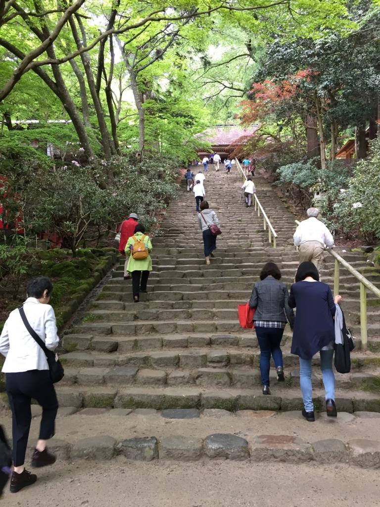 奈良県 室生寺 両脇にしゃくなげの木