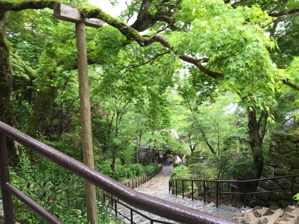 奈良県 長谷寺 雨の中の緑