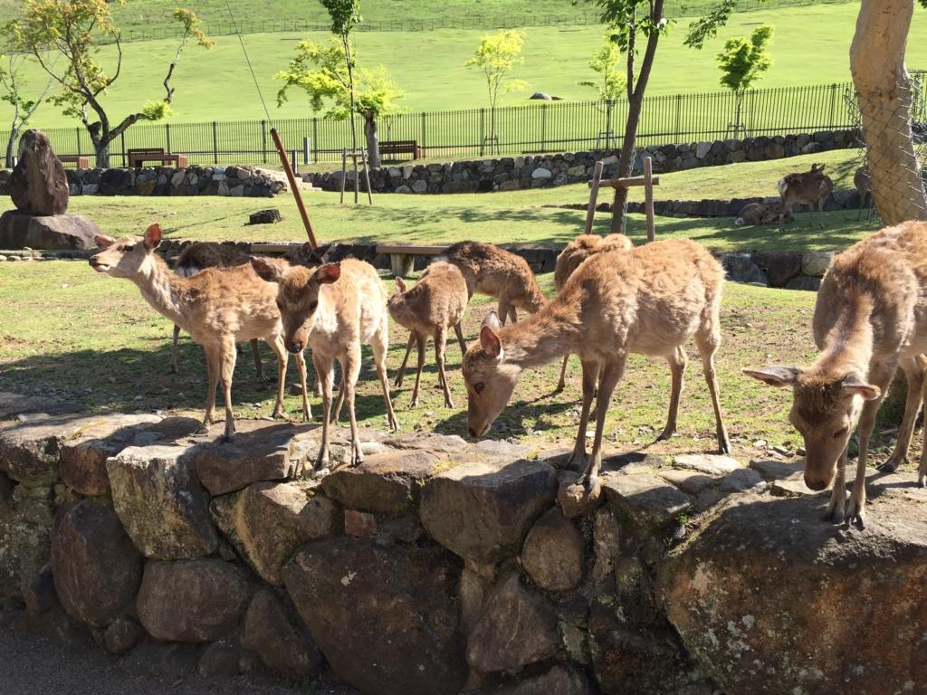 奈良県 奈良公園 鹿さん達