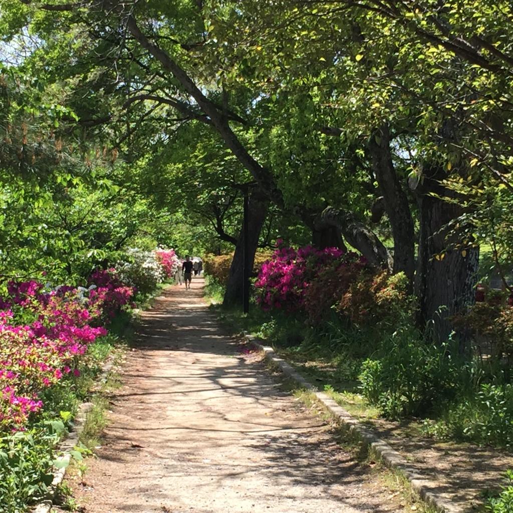 京都府 長岡天満宮 八条が池 周辺の道