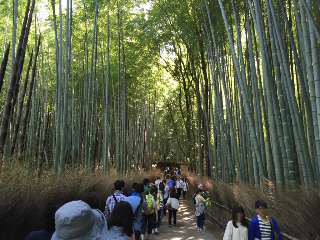 ゴールデンウイークの嵐山 竹林