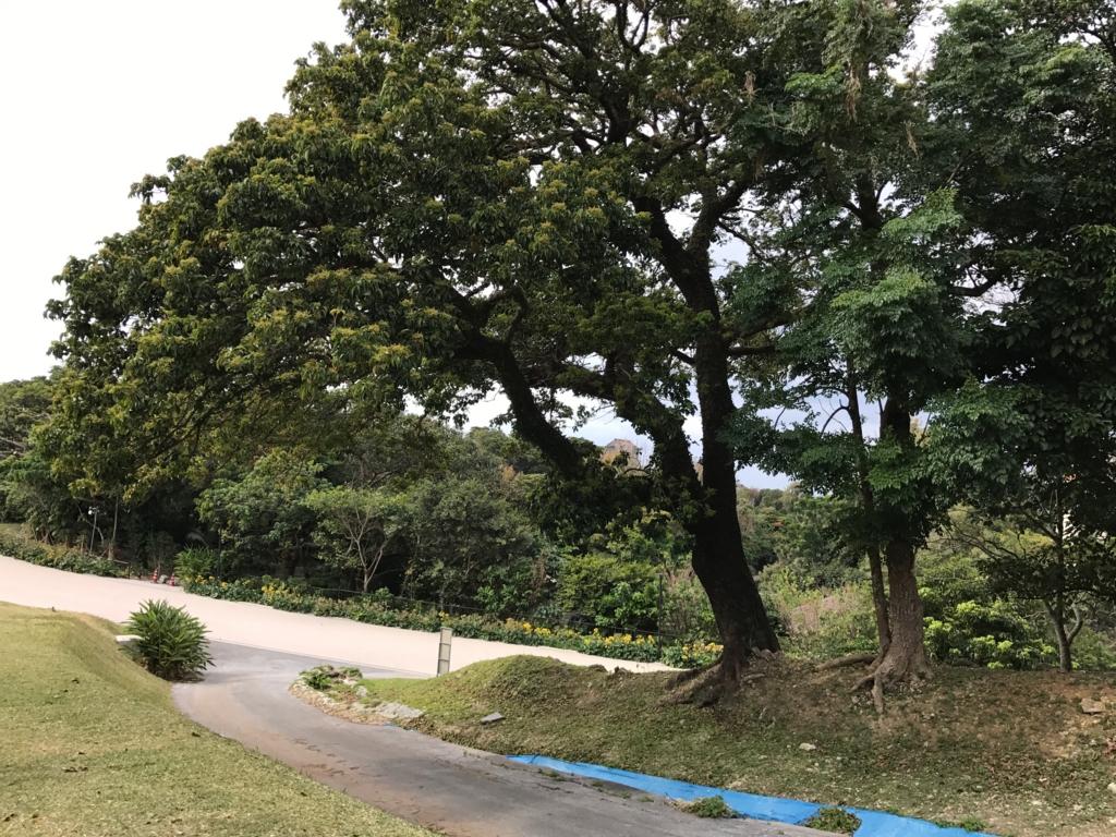 沖縄県 首里城公園 下の道と合流