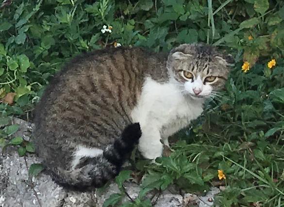 沖縄県 「波の上ビーチ」付近の猫さん 拡大