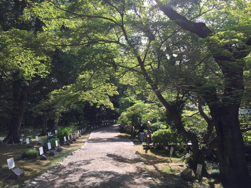 奈良県 春日大社 萬葉植物園 万葉集に詠まれた植物