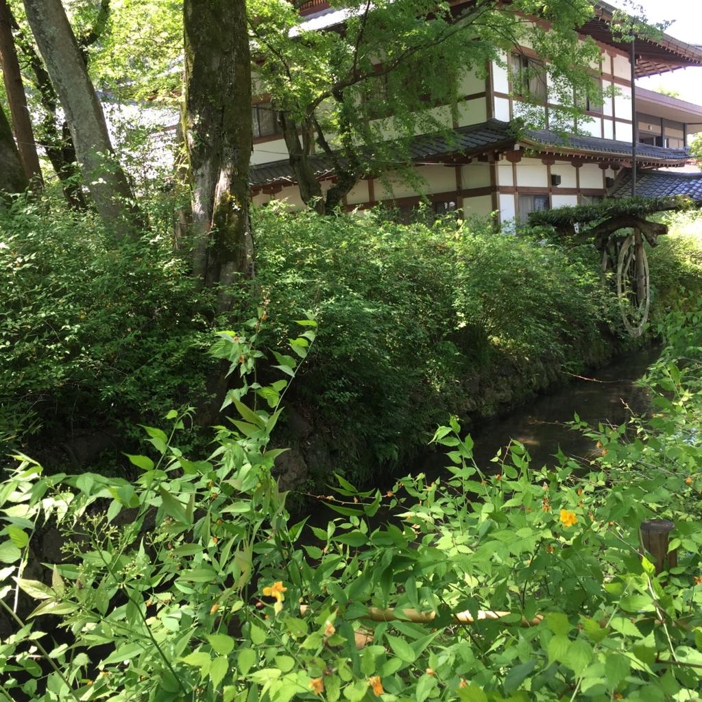 京都府 松尾大社 ヤマブキ? 拡大して 黄色い花を発見