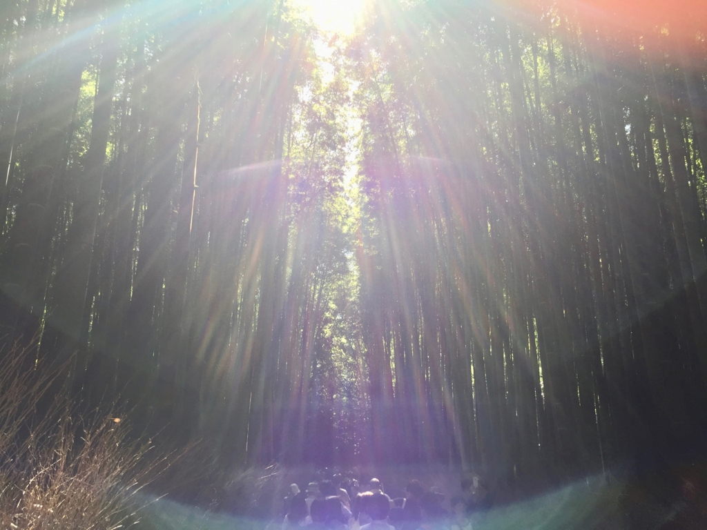 ゴールデンウイークの嵐山 竹林 幻想的な風景