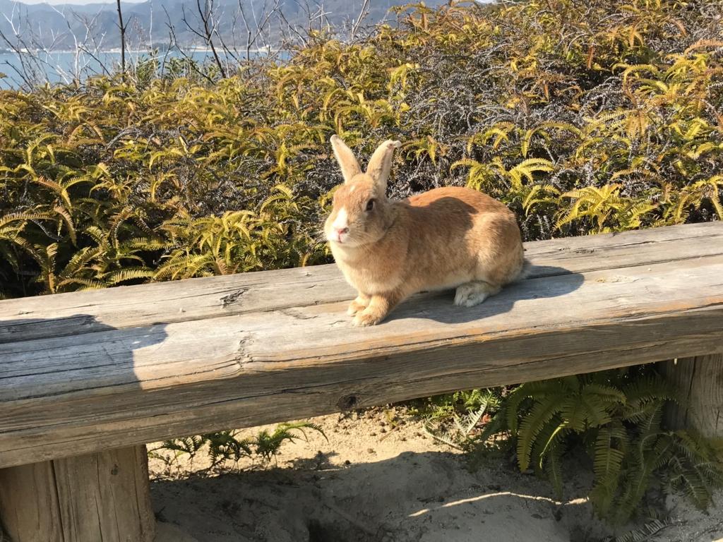 広島県 うさぎ島(大久島)展望台 からの 道 (険しい道)ベンチで休憩中 うさぎさん