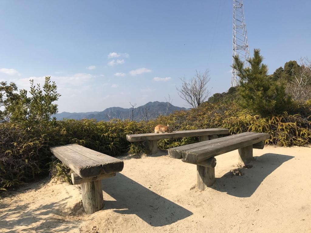 広島県 うさぎ島(大久島)展望台 からの 道 (険しい道)ベンチ うさぎさんとお別れ