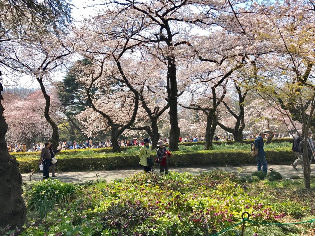 東京都新宿区 新宿御苑 2017年4月 桜満開