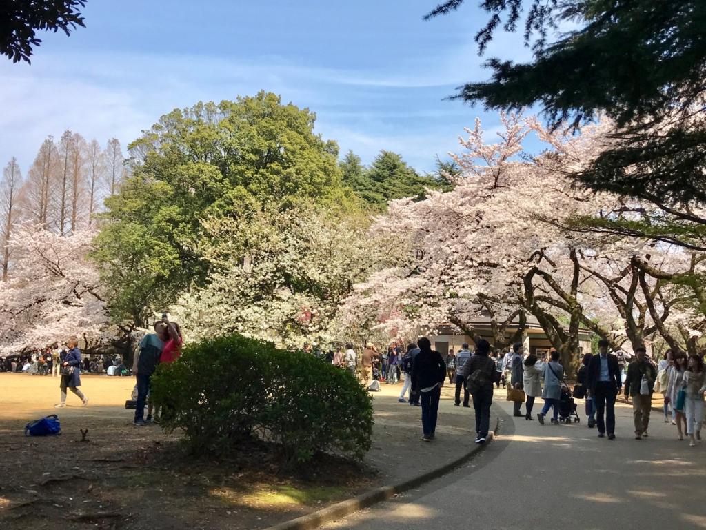 東京都新宿区 新宿御苑 千駄ヶ谷門 近くの桜