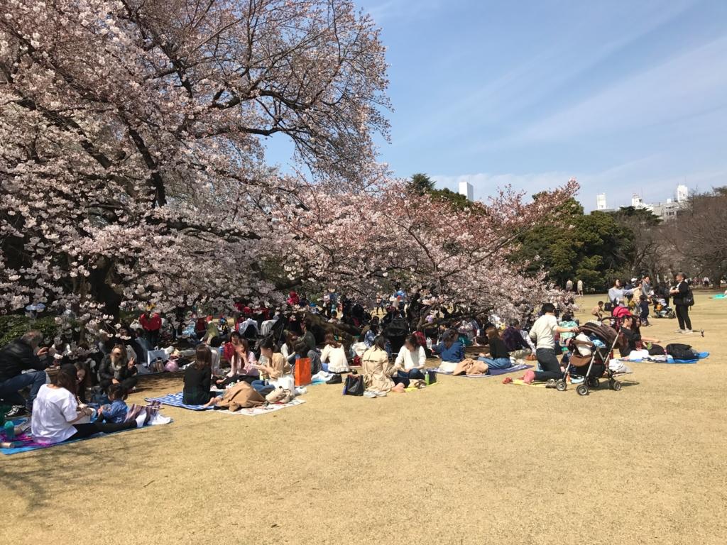 東京都新宿区 新宿御苑 日陰、桜の木の下は 満席