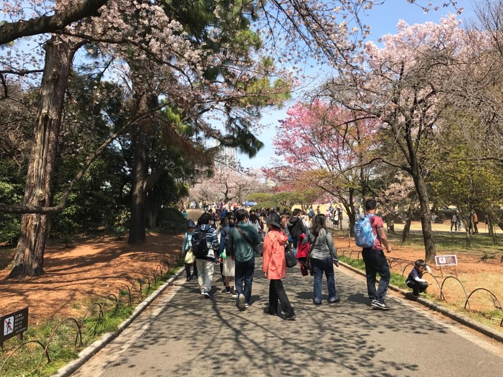 東京都新宿区 新宿御苑 散策している 沢山の花見客