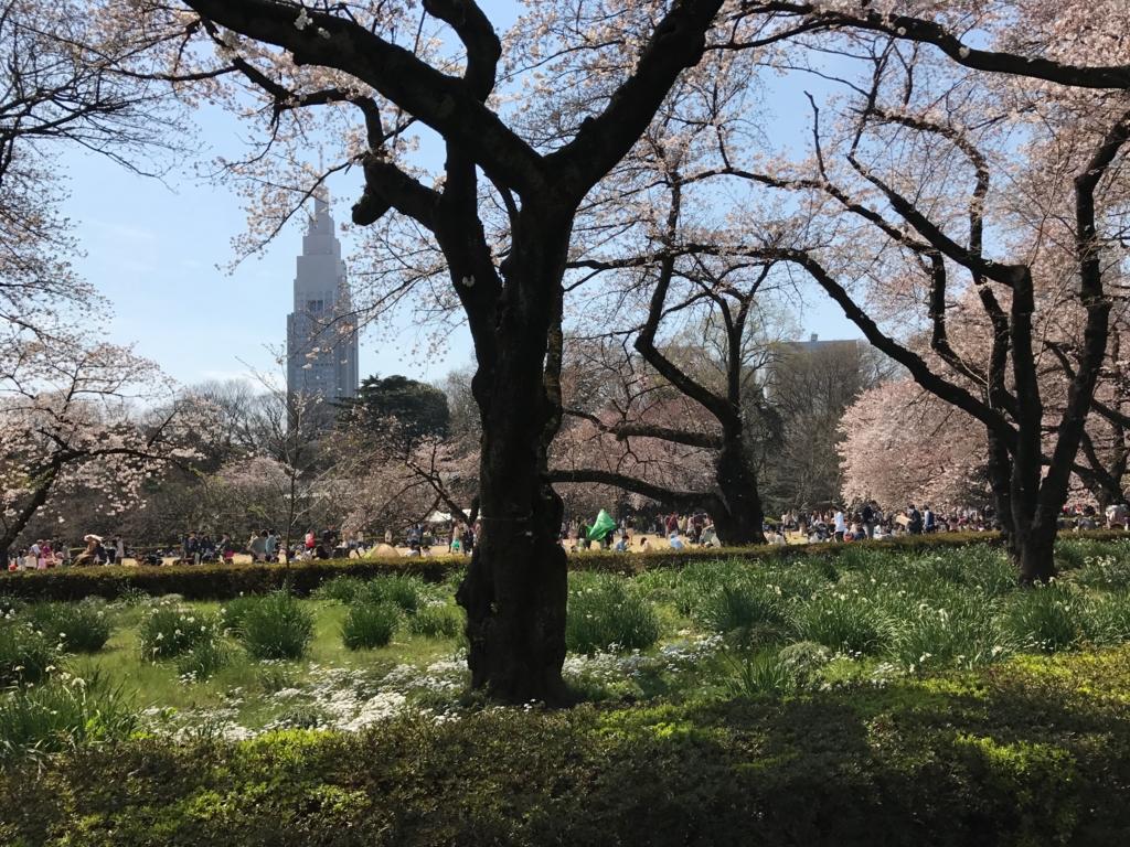 東京都新宿区 新宿御苑 水仙