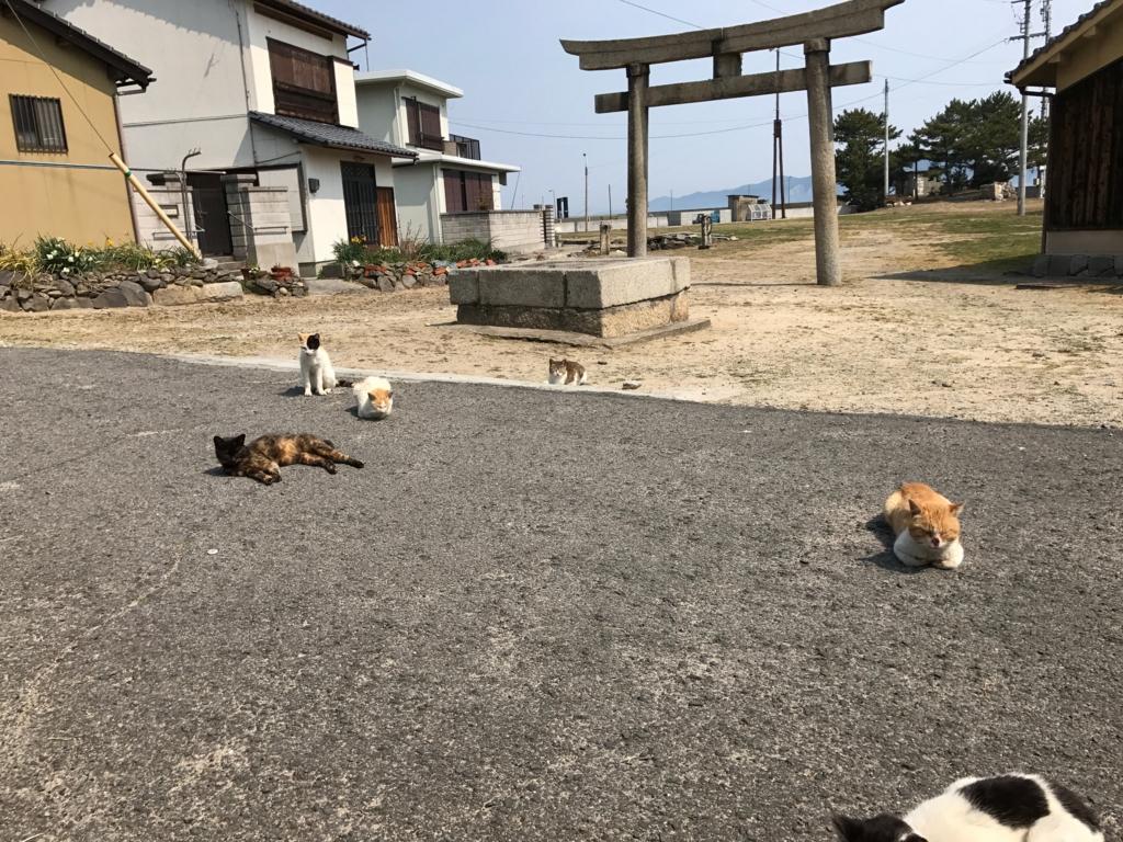 香川県 ねこ島(佐栁島)食事中 グルッと囲まれ、くつろぎ出す猫達