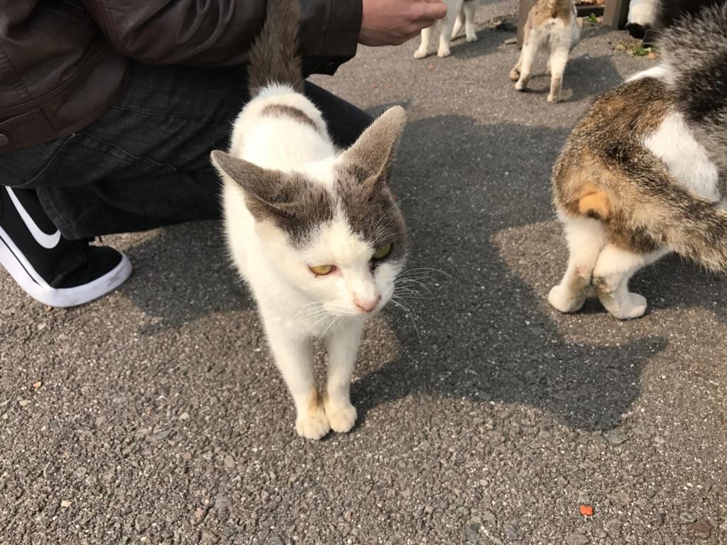 香川県 佐栁島(ねこ島)本浦港付近の 迫力の猫さん
