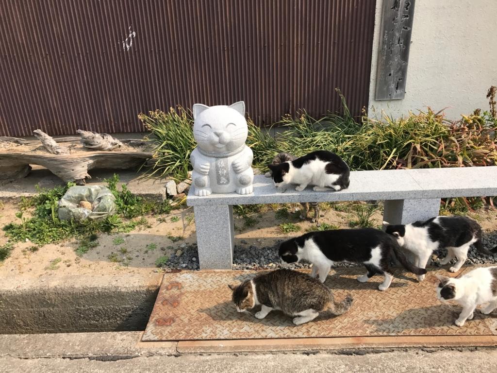 香川県 佐栁島(ねこ島)本浦港 フェリー切符販売所付近 の猫達
