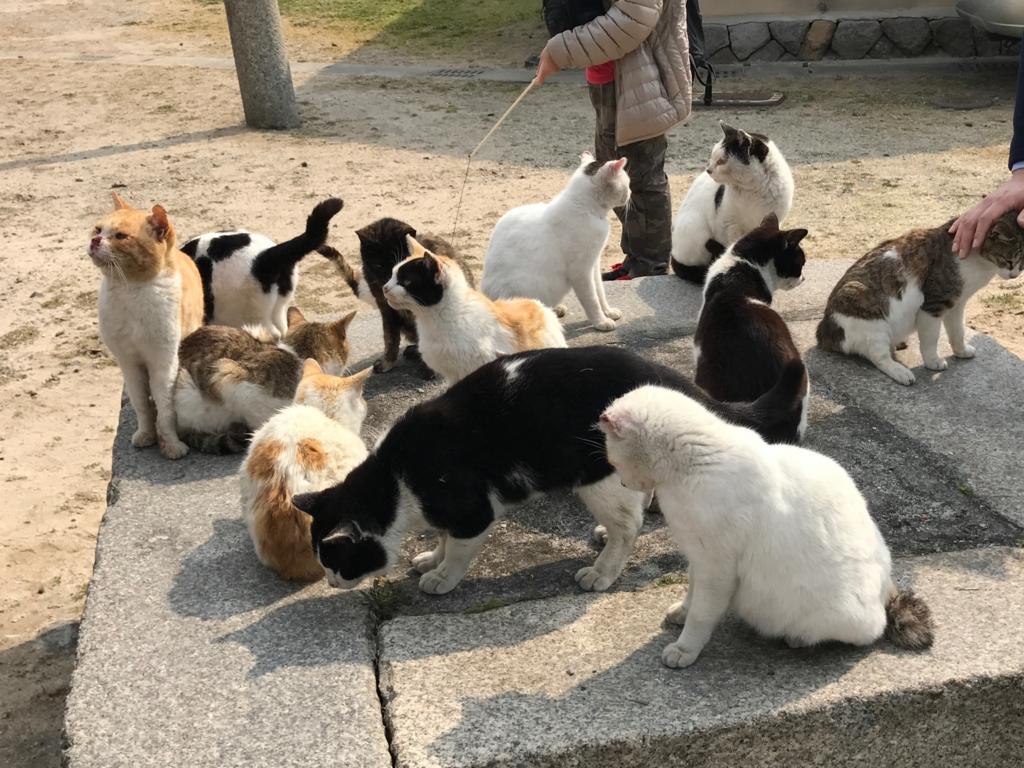 香川県 佐栁島(ねこ島)本浦集落 商店周辺付近 の猫達