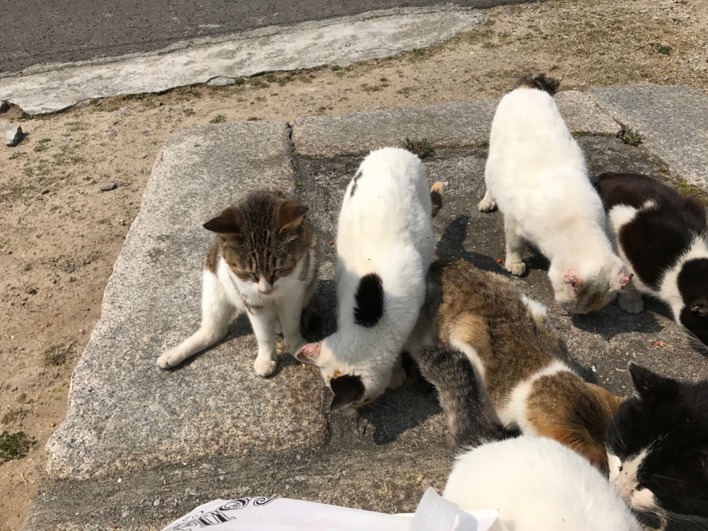 香川県 佐栁島(ねこ島)本浦集落 商店周辺付近 穏やかな猫達