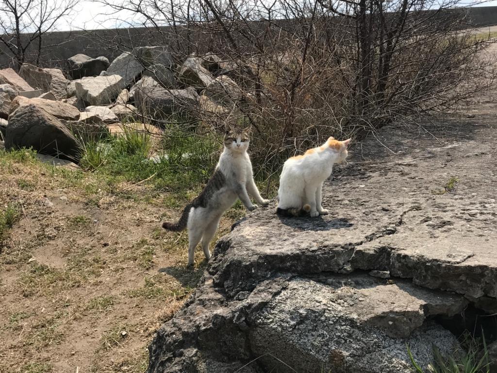 香川県 佐栁島(ねこ島)本浦集落 防波堤付近 微笑ましい猫達