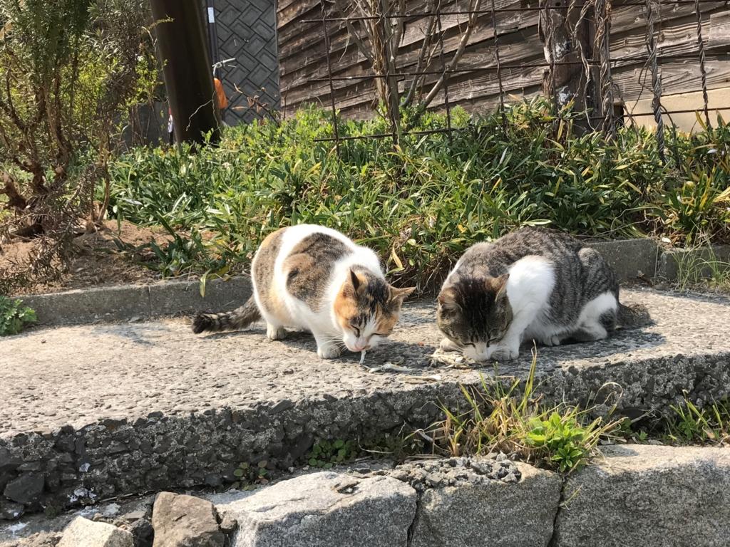 香川県 佐栁島(ねこ島) 廃校 「体験センター」 の 猫達