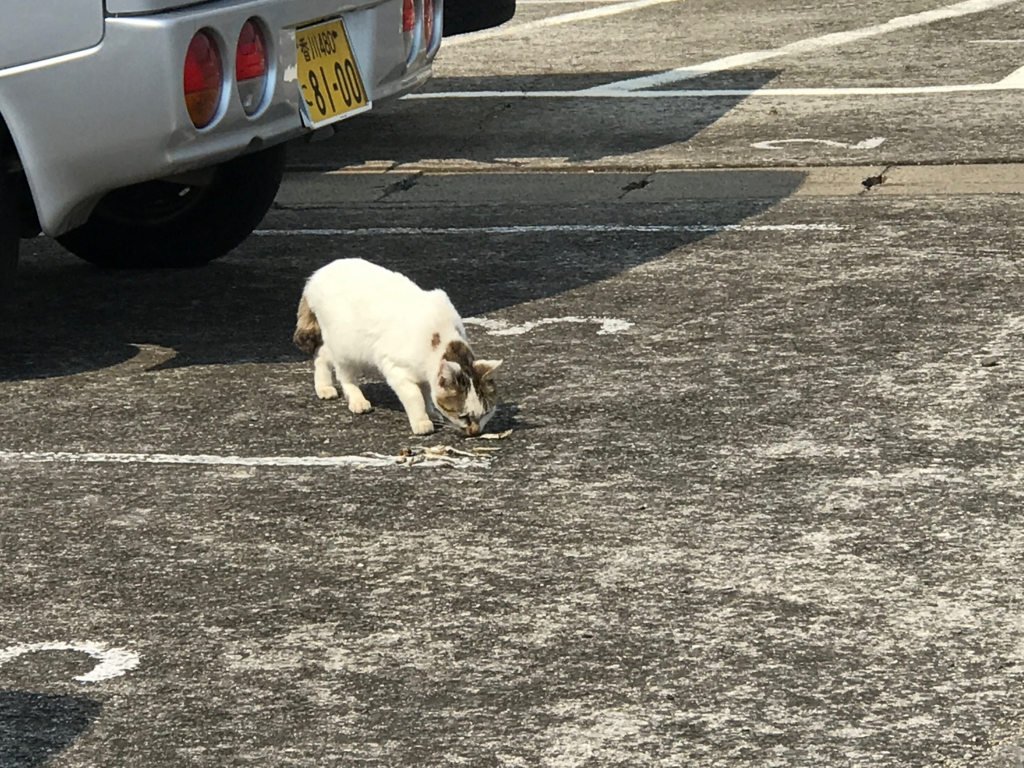 香川県 佐栁島(ねこ島)長崎集落 威嚇してきた 猫さん