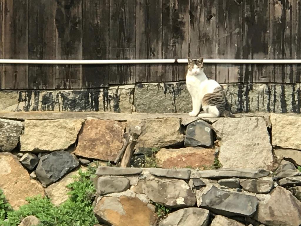 香川県 佐栁島(ねこ島)本浦集落 遠目で見ている猫さん