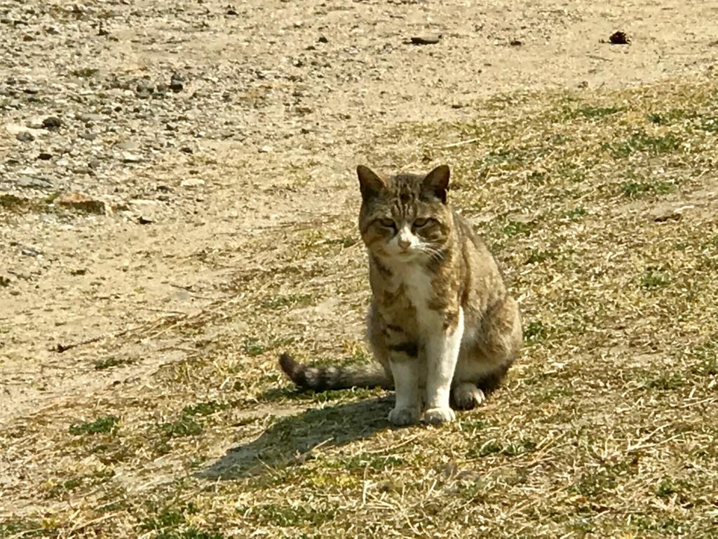 香川県 佐栁島(ねこ島)本浦集落 顔立ちのかわいい 猫さん