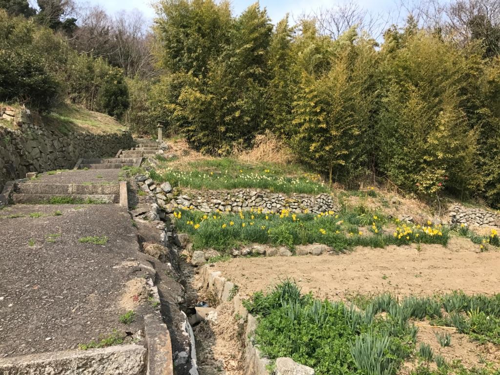 香川県 佐柳島(ねこ島)「大天神社」お参り道 最初は散歩道